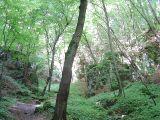 Dolina Prądnika - boczny wąwóz
