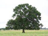 Drzewo jak PZU