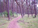 Szlak czerowny pieszy